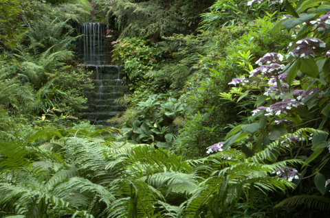 Shade and Woodland Planting Designs Shropshire