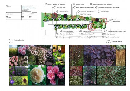 Planting Design, Cambridgeshire, Roses