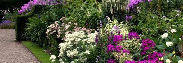 Planting Design Bedfordshire - Herbaceous planting
