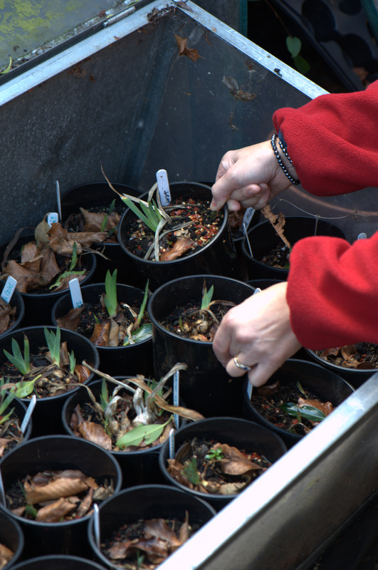CLEARING_COLDFRAME