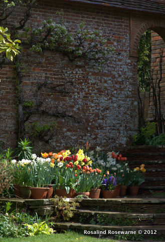 ROSEWARNE GARDENS-GREAT DIXTER-POTS OF TULIPS IN THE SUN