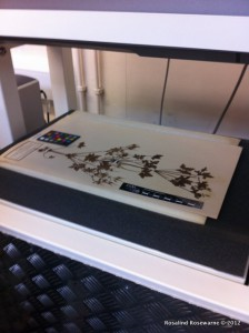 State of the art scanner for herbarium samples