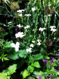 Delicious plant combinations with Head gardener additions