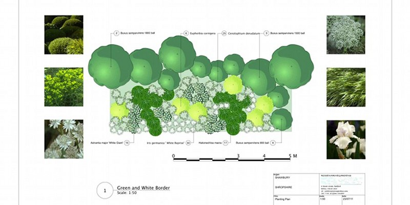 Planting Design for a White and Green Border