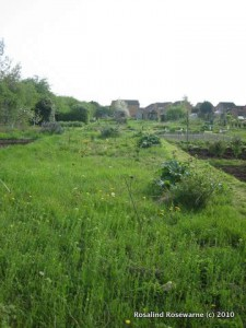 Allotment, DAY 1