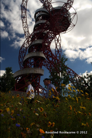 Coreopsis tinctoria below Anish Kapoor's Orbit