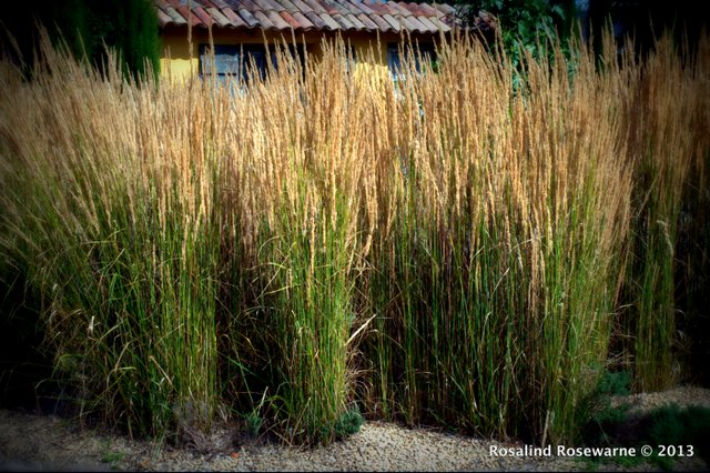 Impressionistic grasses russled by the late summer breezes