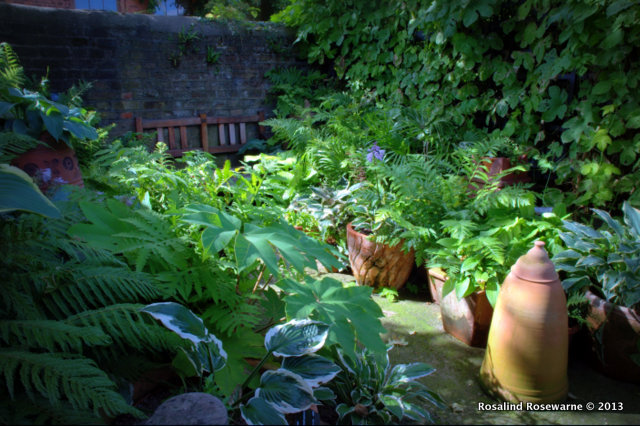 Shaded by a towering Acer this hideaway shade garden in pots