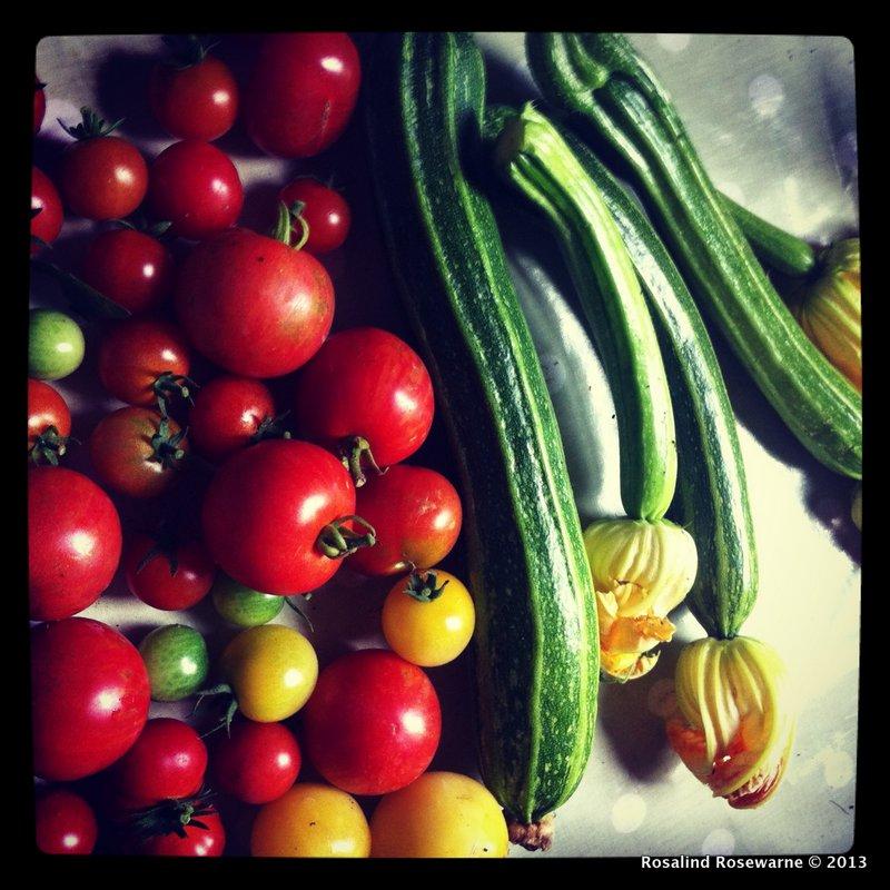 Tomato and Zuchinni glut. After reading up on it I finally got some Zuchinni fruit