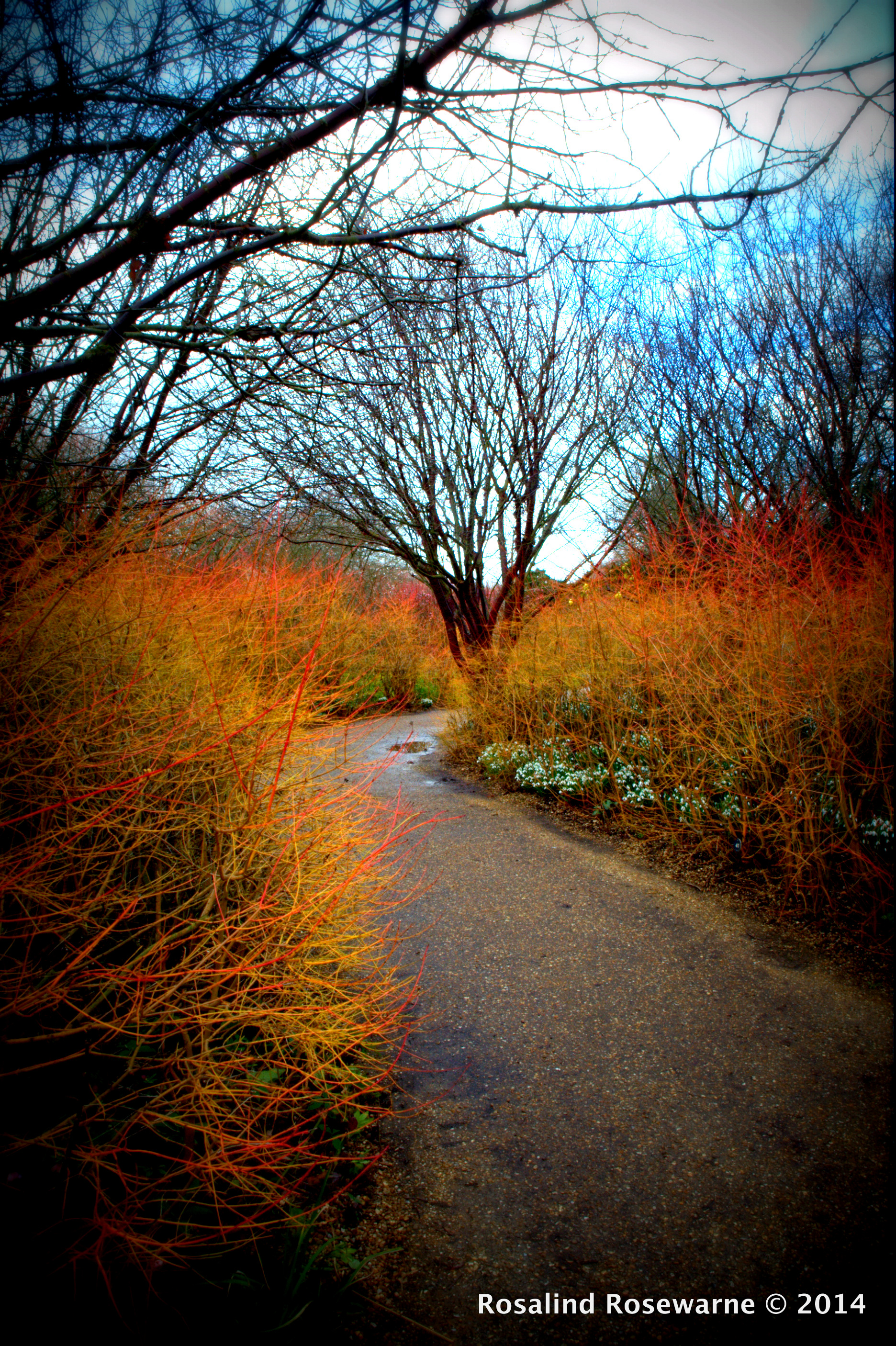 Curving path of Anglesey Abbey in JaNury