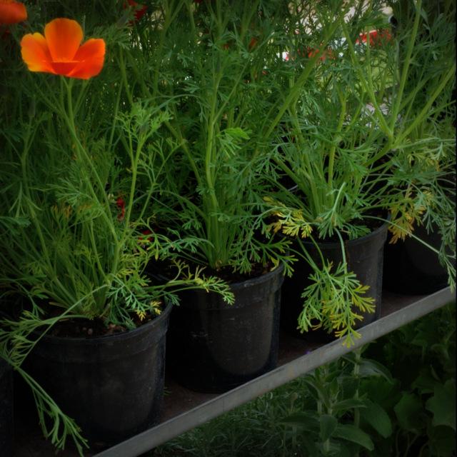 PLANTS ONA TROLLEY