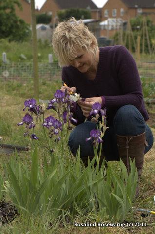 How to Hybridise Iris