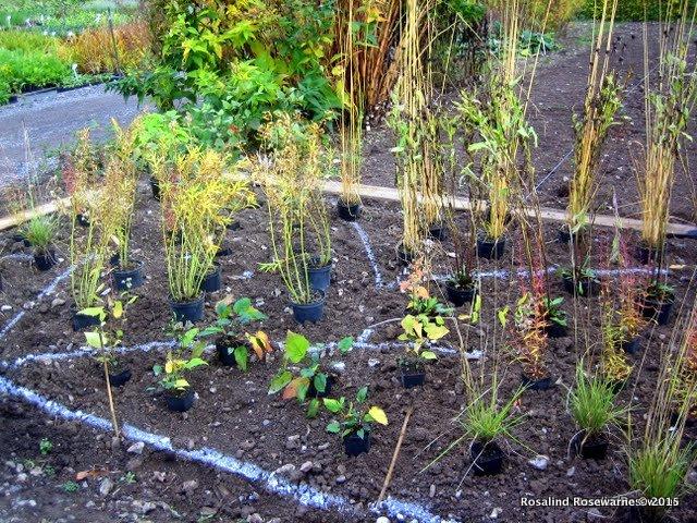 planting plan_orchard_Dene