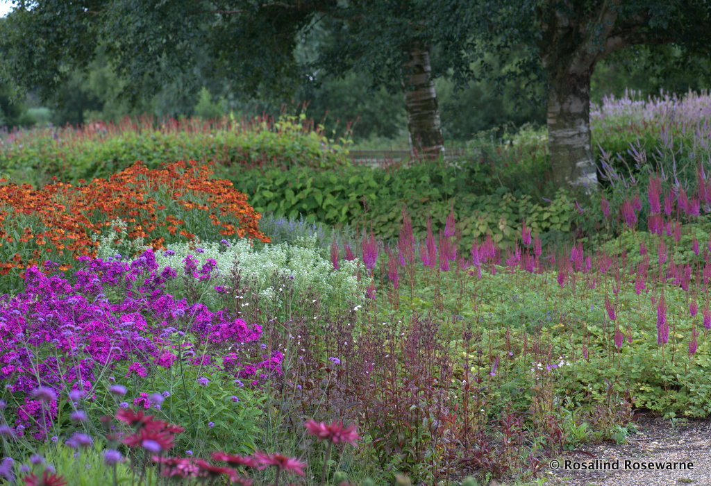 7 Rewarding Later Summer Perennial Plants Rosewarne