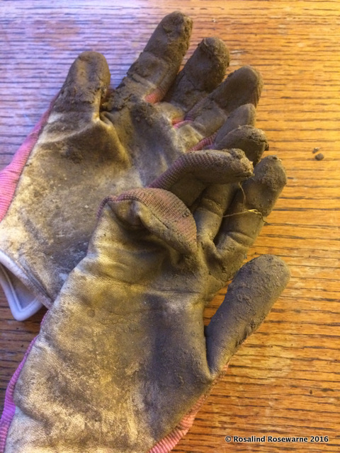 gardening gloves dirty