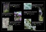 ROSEWARNE GARDENS SAMPLE PLANTINGS